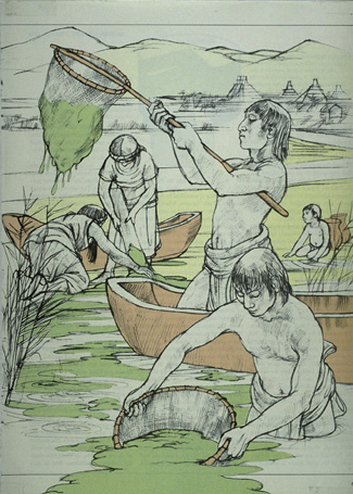 Aztecs harvesting Spirulina for Food