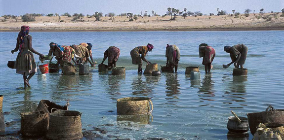 Kanembu women collect spirulina in Lake Chad